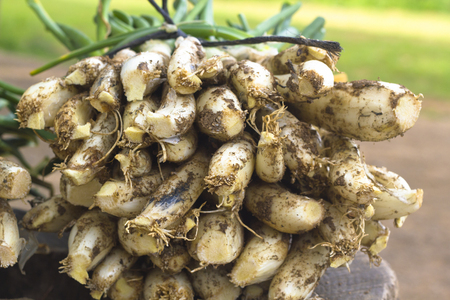 calsots: Raw calcots