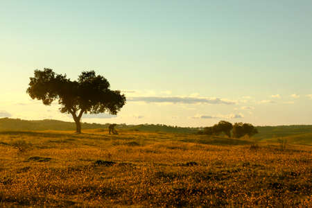 alentejo: Beautiful Alentejo landscape
