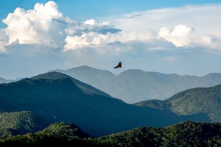 instinct: Bird flying over the mountains in Rio de Janeiro.