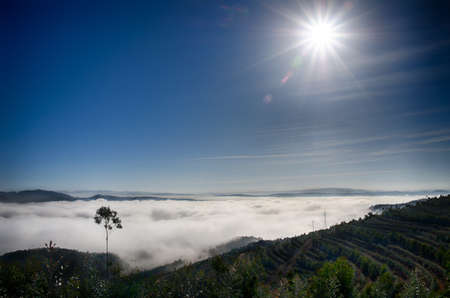 Above the sea of clouds on a mountain in Valongo, Portugal, overlooking a tree plantation with sun in front