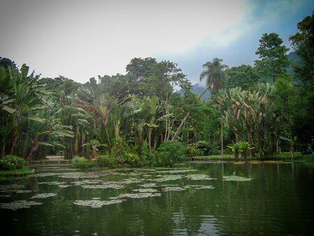 Botanical Garden, Rio de Janeiro, Brazil Stock Photo