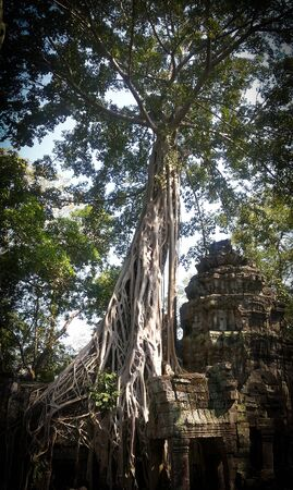 Ruins of the Ta Prohm temple in Angkor Wat. Ancient Khmer architecture near Siem Reap, Cambodia