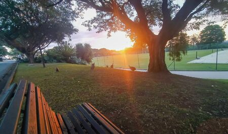 Amazing sunset at the grass field. View from a park bench Stock fotó