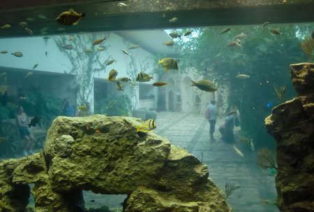 Beautiful aquarium in Quintana Roo, Mexico