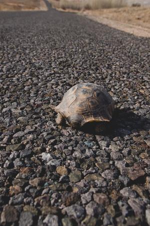 Wild black turtle in freedom Stock fotó