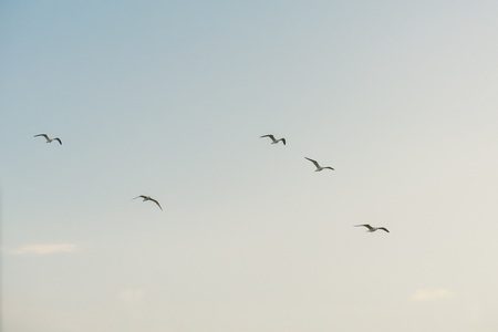group of white seagulls flying against azl sky Banque d'images