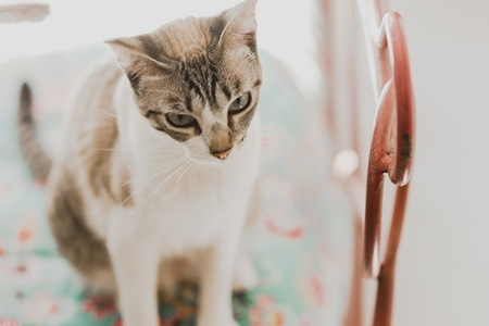 Calm pet cats, resting in a house with unfocused background. Imagens