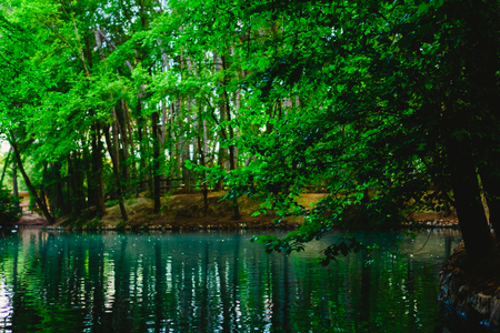 Transparent water of a stream and a lake in the green forest