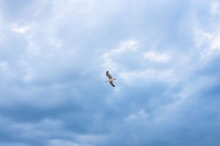 Seagull flying over blue sky