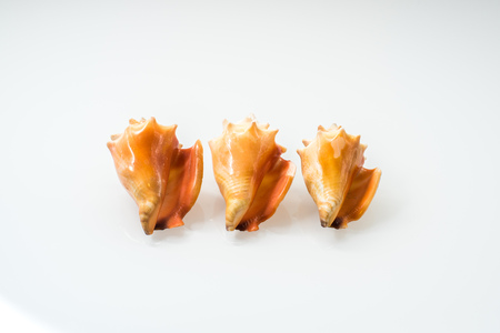 Group of seashells in studio with white background Standard-Bild
