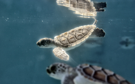 Small turtles in the water