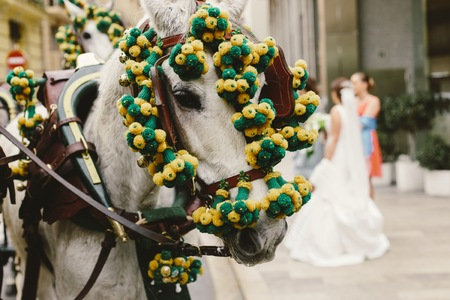 Head of Spanish race horses decorated with garlands.