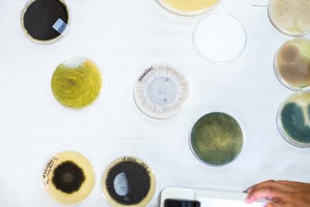 Culture of bacteria in petri dish Stock Photo