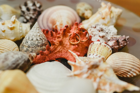 Wedding rings surrounded by seashells, framed in maritime theme.