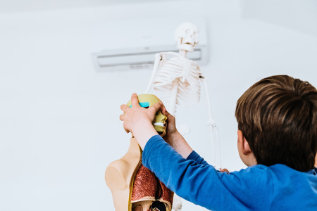 Children in a classroom using an anatomical model of the human body.