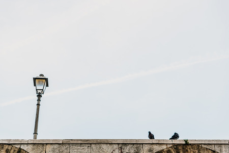Urban street lamp background with day pigeon.