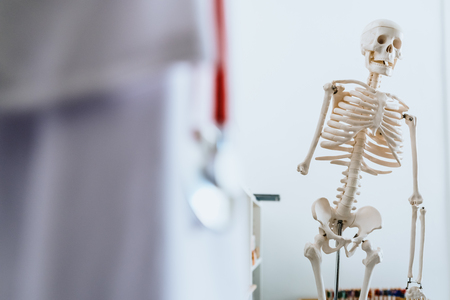 Anatomical skeleton in the clinic of a family doctor.