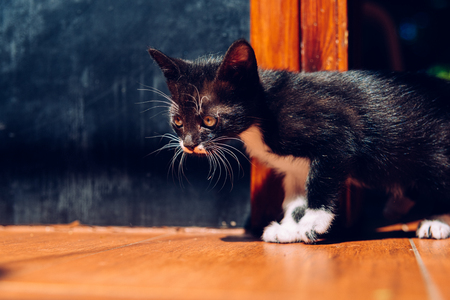 Having pet kittens requires a responsibility to take care of them properly.