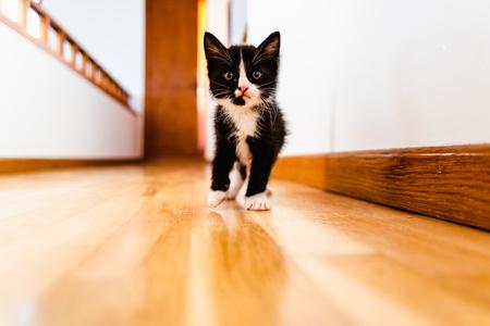Black and white kitten walking down a corridor inside house.