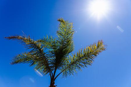 Achtergrond van de top van een palmboom van onderaf gezien tegen de middagzon.