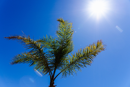 Background of the top of a palm tree seen from below against the midday sun. Banco de Imagens