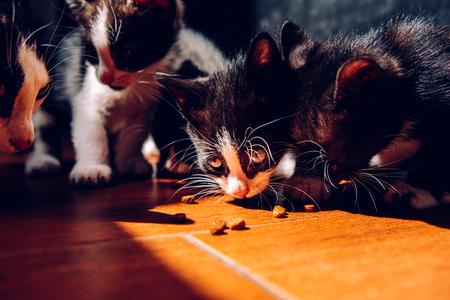 Miot kociąt jedzących na ziemi w słońcu z ciemnym tłem.