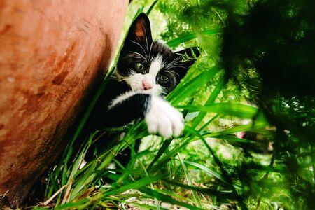 Black and white kitten exploring the garden. Stock Photo