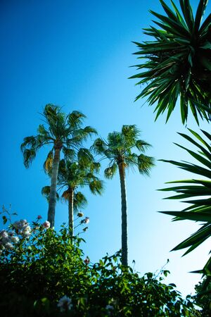 Background of tropical palm trees viewed from below a sunny day, wanting to spend a vacation.