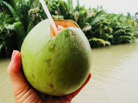 A tourist takes coconut water juice with a straw directly from a green coconut freshly collected in Asia. Stock Photo
