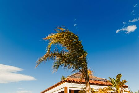 Top part of a slender palm tree in a bar on a sunny day vacation with clear blue sky background.