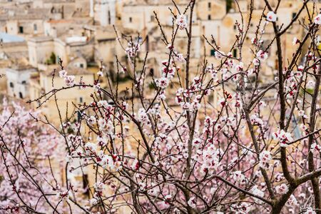 Flowering almond trees during the spring in a Mediterranean city, ideal for a soft background. Stock fotó
