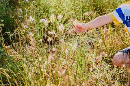 Child picking flowers in spring.