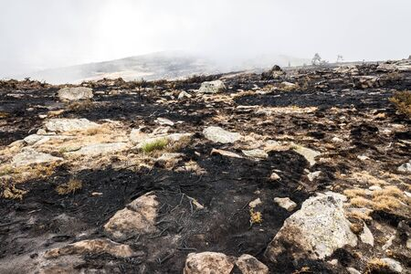 Remains of a forest fire with burned scrub. Imagens
