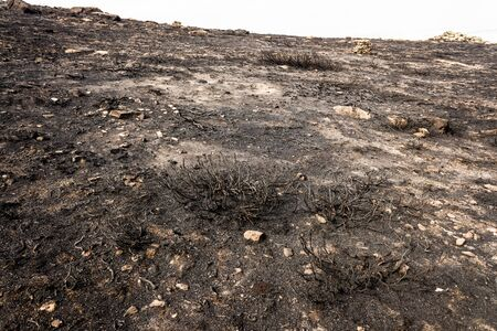Mountain bush burned by a summer fire.