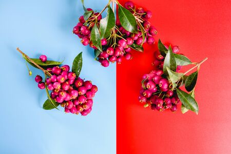 Delicious looking red berries isolated on a studio background.