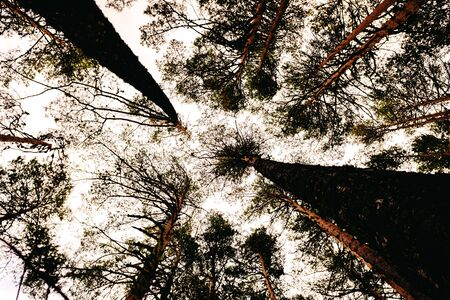 Inspiring image of tall trees seen from below with the sky in the background.