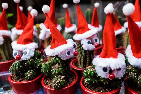 Plants decorated with red Christmas motifs.