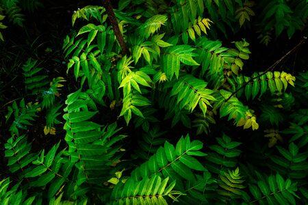 Détail du sol d'une jungle, recouvert de feuilles vertes.