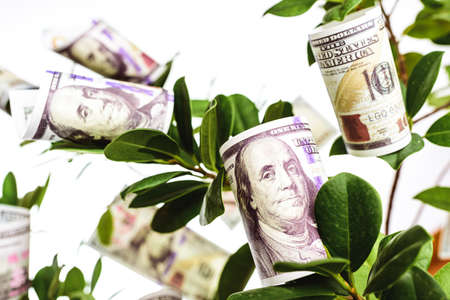 A tree with dollar bills hanging from its branches, concept of easy money.
