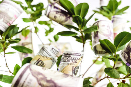 American dollar bills growing on the branches of a fortune tree.