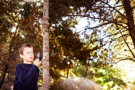 Young curious boy uses his magnifying glass to find insects on tree trunks. Stock fotó