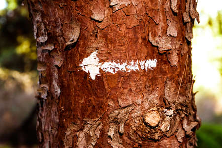 A white arrow mark painted on a tree trunk.