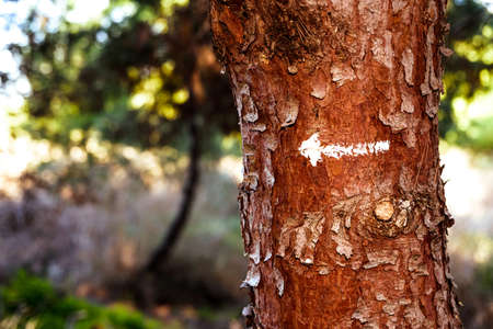 An arrow indicates the way forward in nature conservation, tree with copy space.