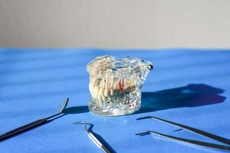 Dental tools for healing dentures, jaw isolated on a dentist doctor's table.