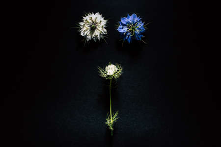 Artistic composition of wild flowers isolated on black background in a studio with beautiful white and purple petals.
