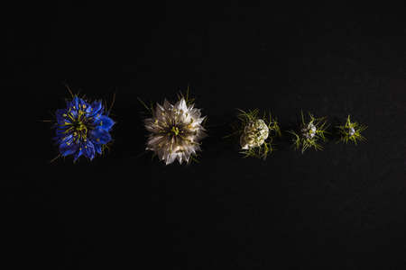 Elegant artistic backdrop of flowers isolated on black background to hang on canvas frame. 免版税图像