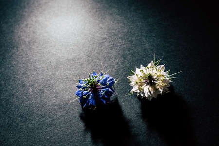 Two small white and purple flowers arranged on a black table in a symmetrical natural composition.