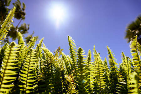 Ferns in the sun suffer the consequences of climate change.