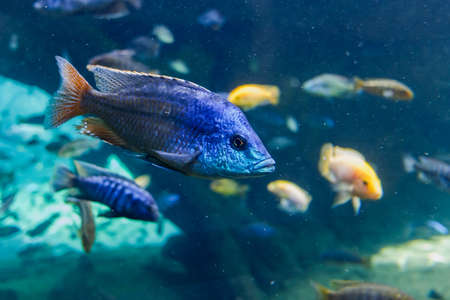 Interior of a large aquarium with hundreds of tropical fish.