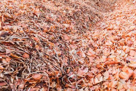 Dry organic remains of vegetable peelings. 免版税图像